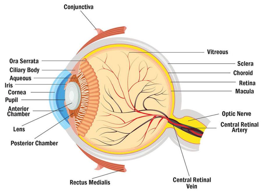eye diagram game
