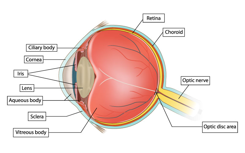eye diagram label