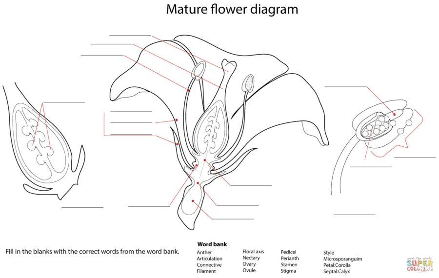 flower diagram worksheet