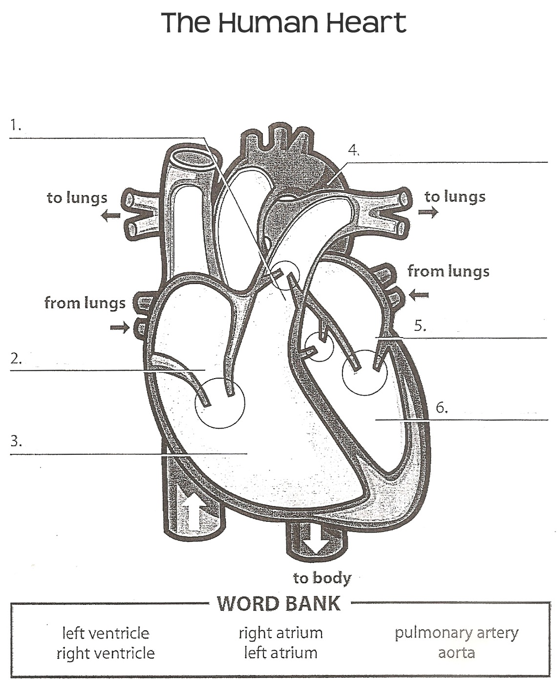 heart diagram worksheet