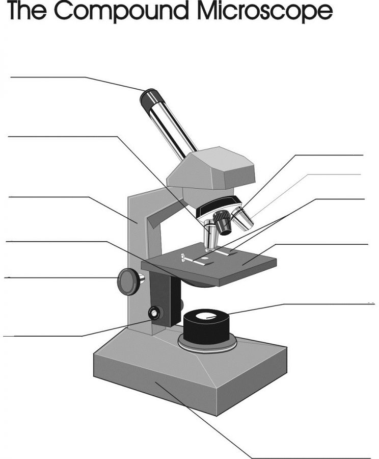 microscope diagram blank