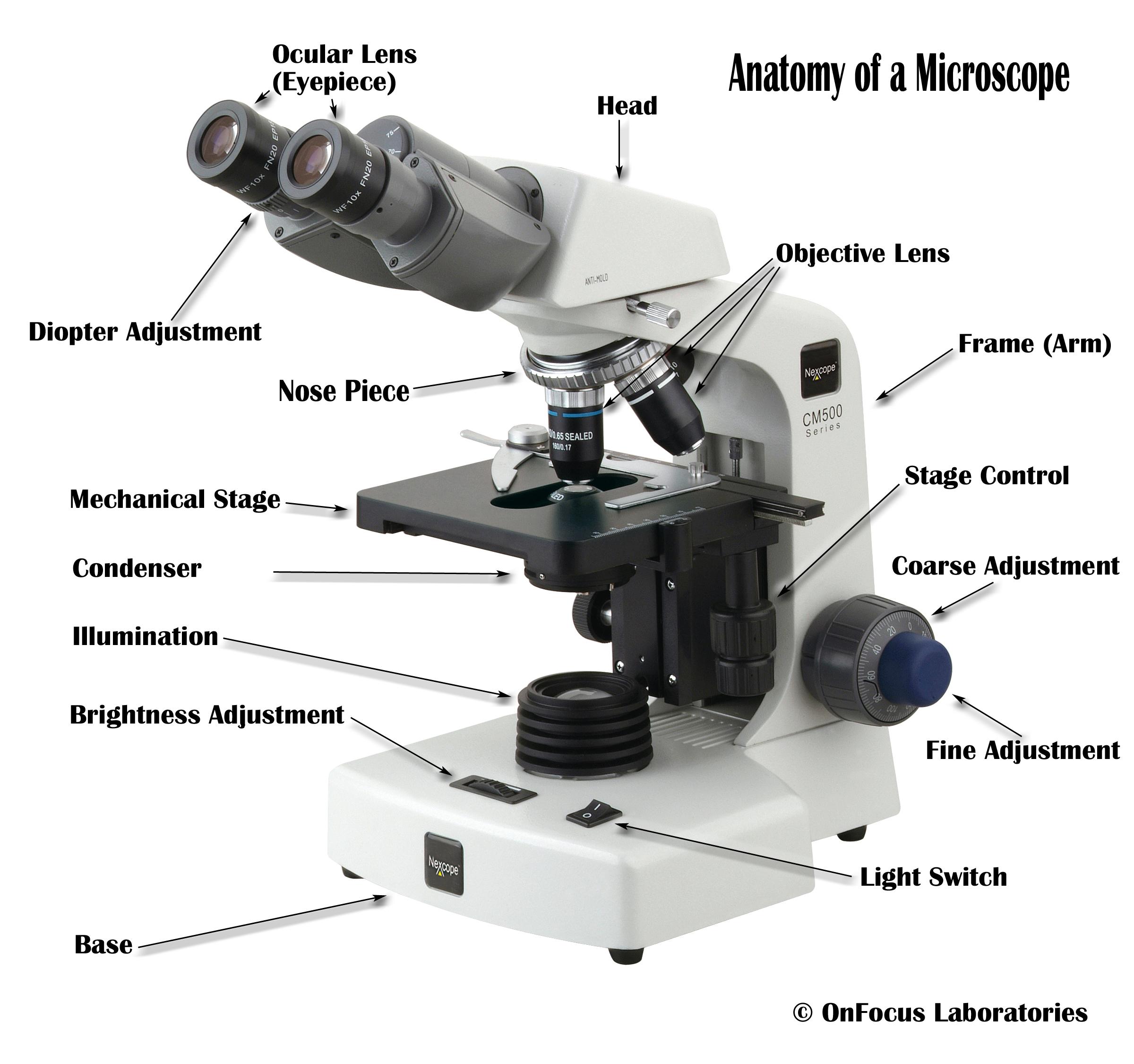 Microscope Diagram to Print