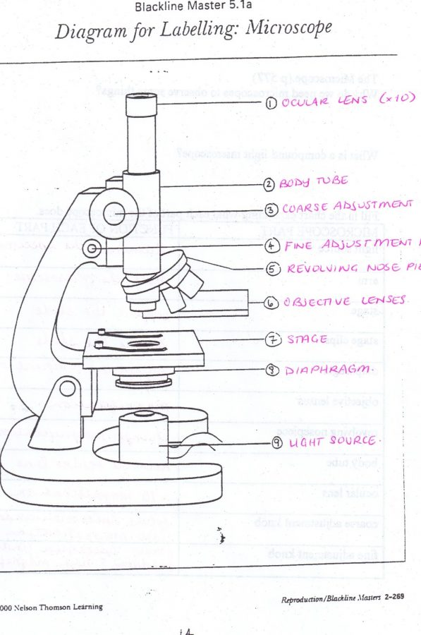 microscope diagram detail