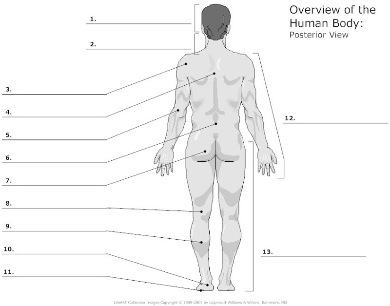 diagram of the human body unlabeled