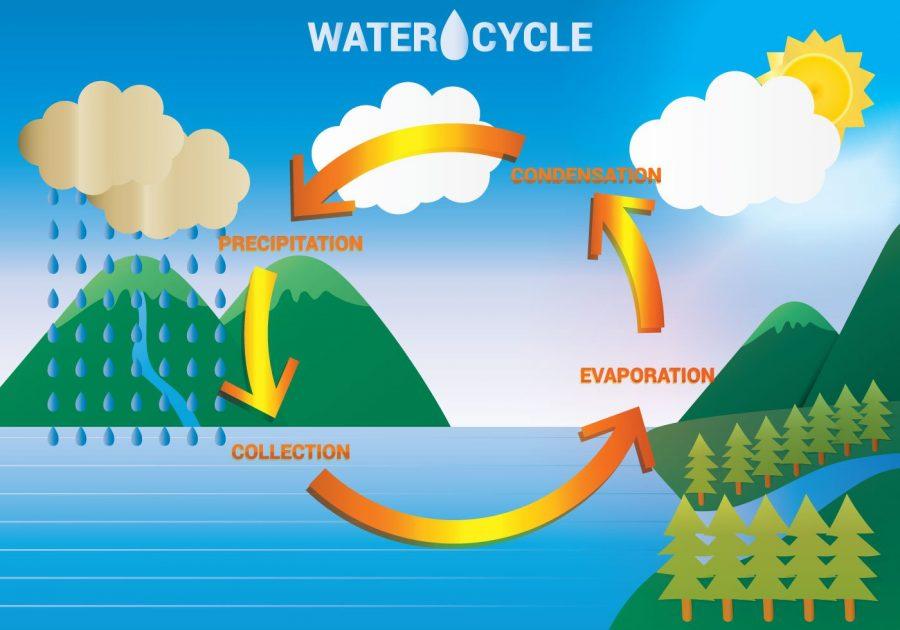 diagram of water cycle kids