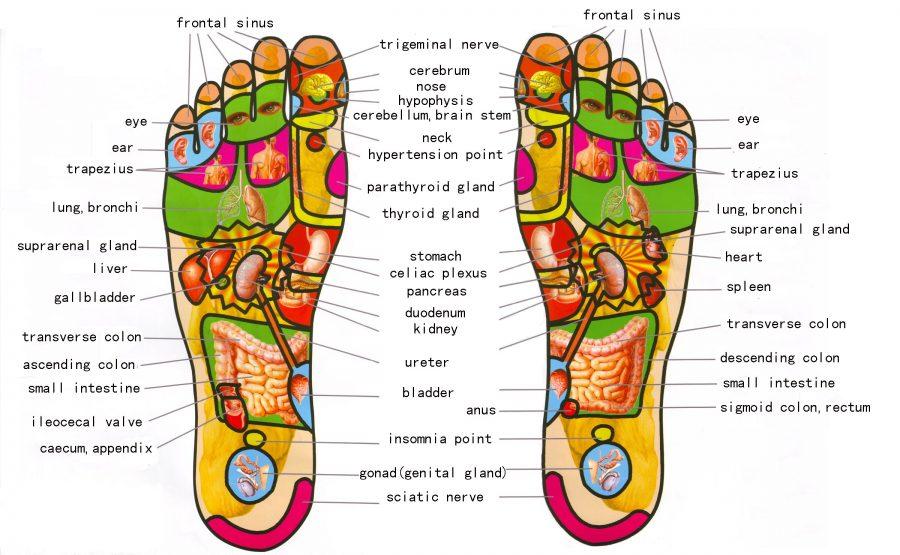 foot diagram reflexology