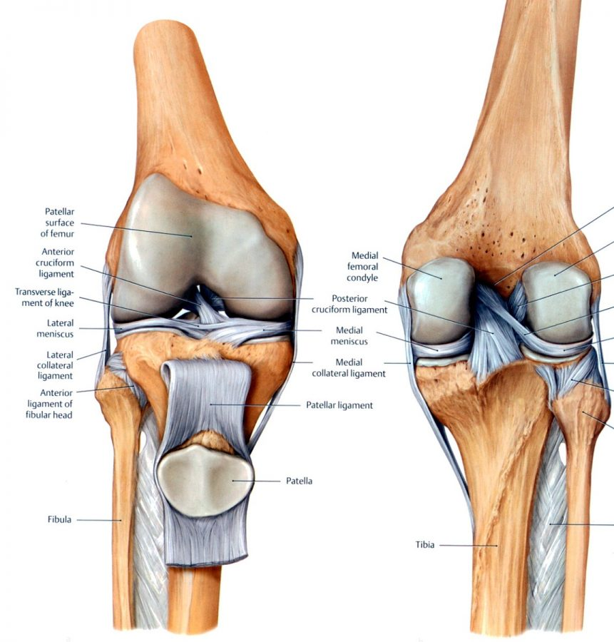 knee diagram bone
