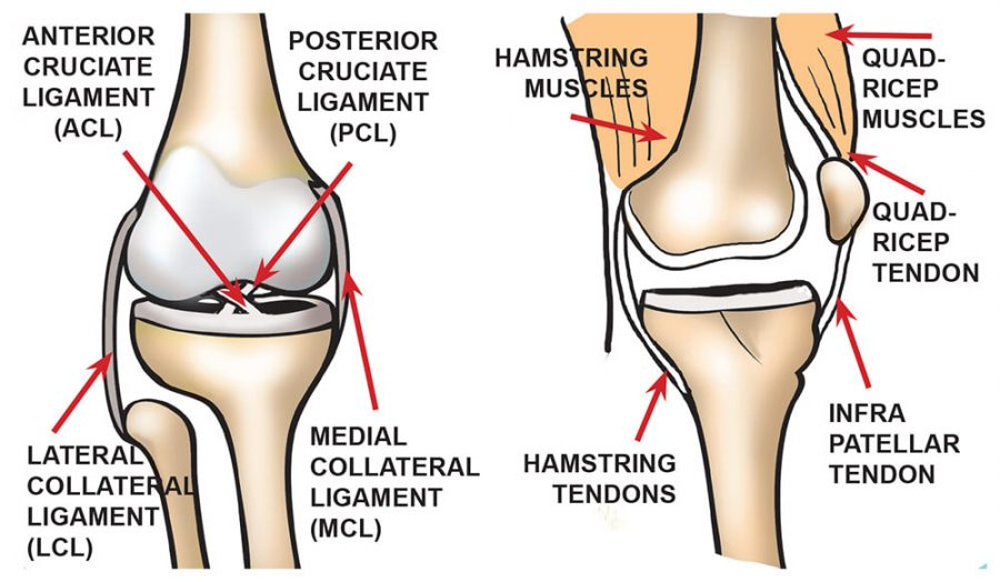 knee diagram paint