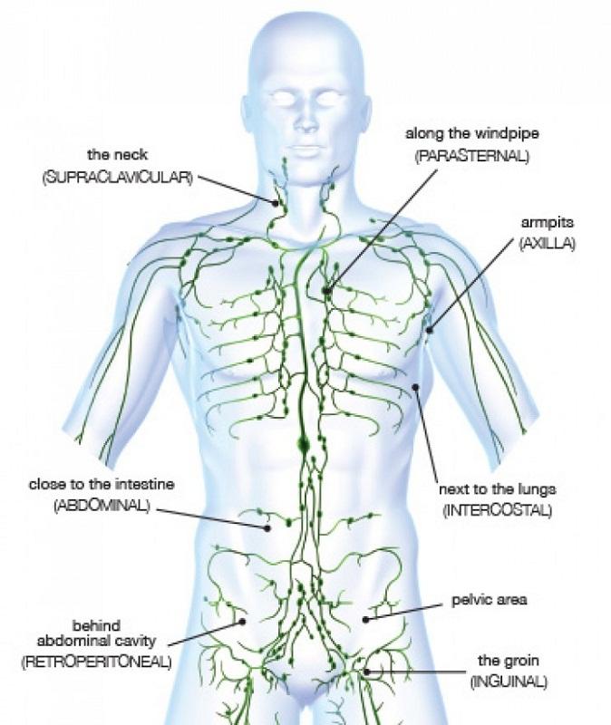 lymphatic system diagram human