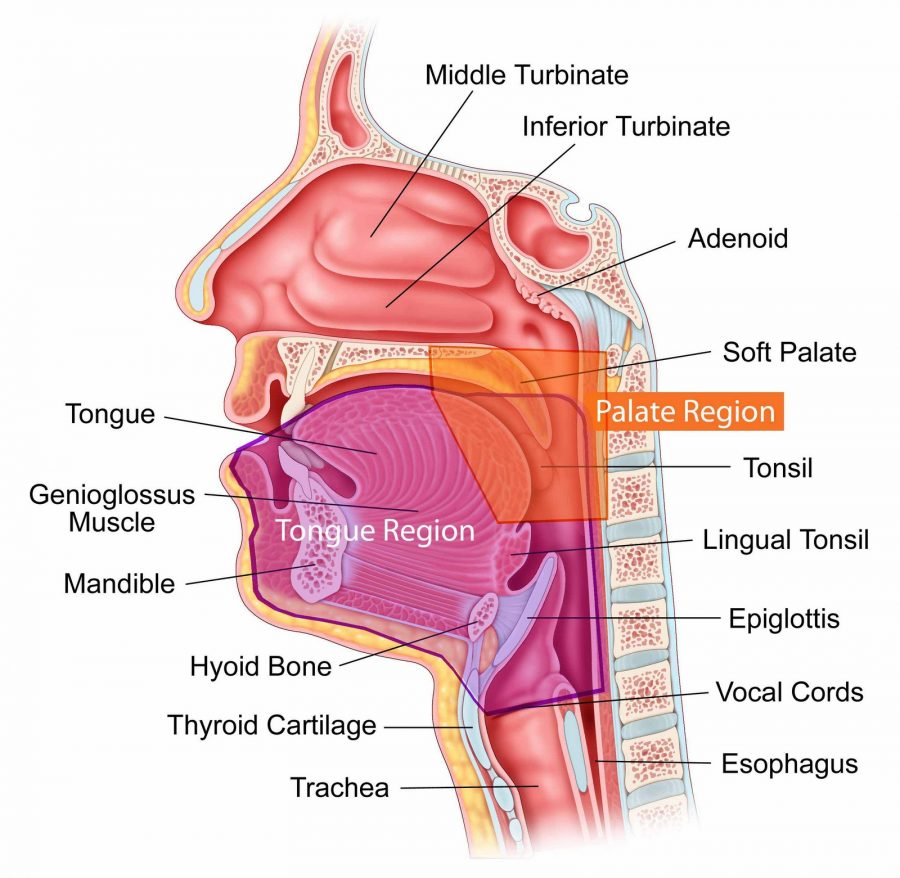 nose diagram throat