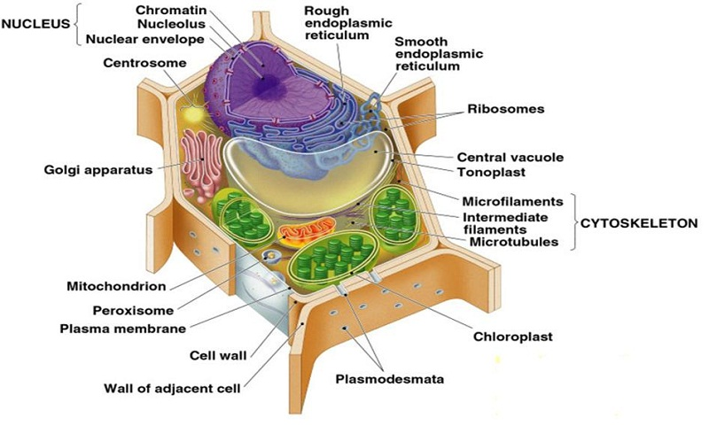 plant cell diagram test