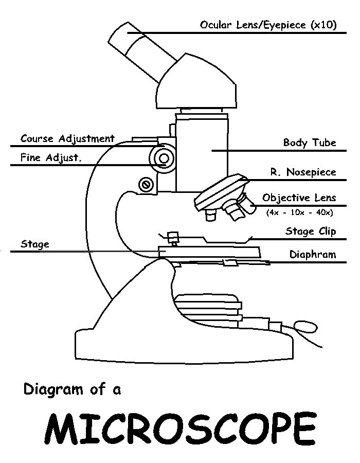 diagram of a microscope labeled