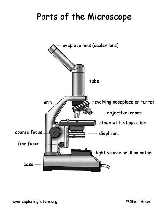 diagram of a microscope labeling
