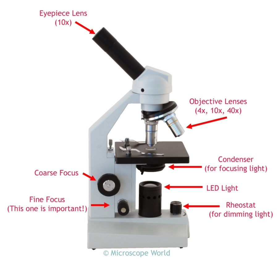 diagram of a microscope parts