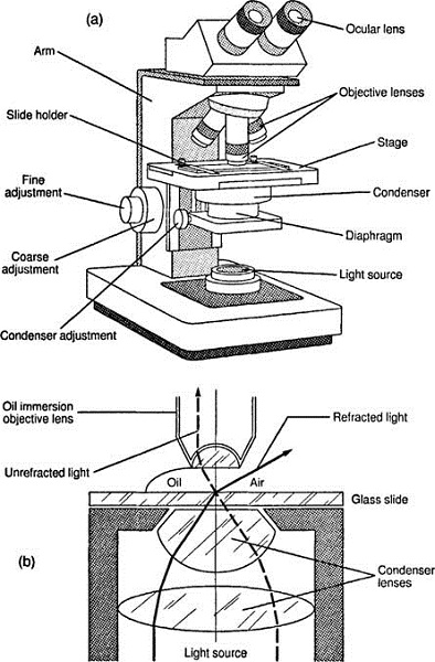 diagram of a microscope type