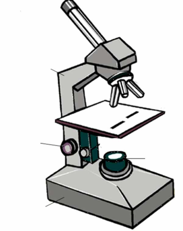 diagram of a microscope unlabeled