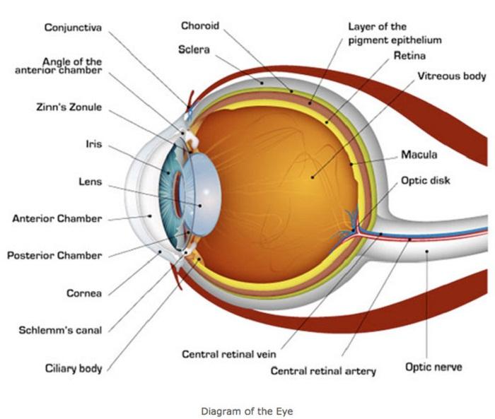 diagram of eye labeled
