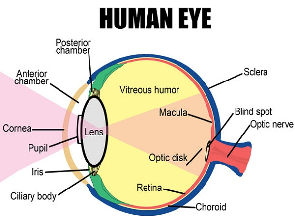 Diagram For An Eye To Print