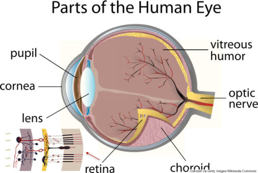 diagram of an eye parts