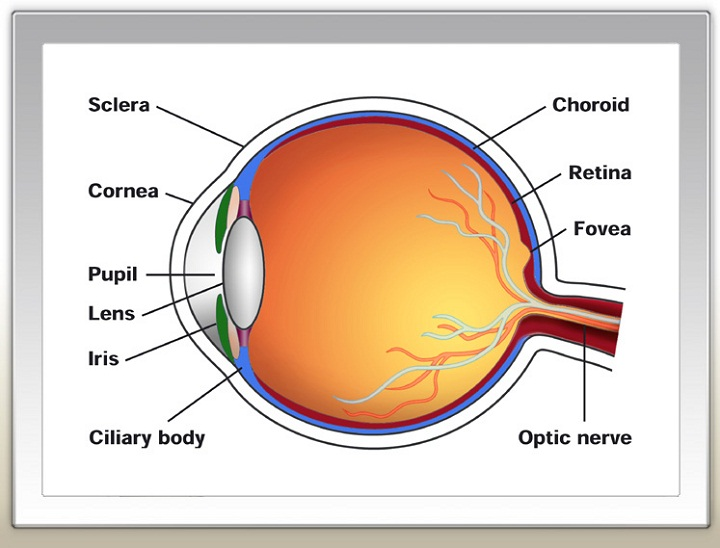 human eye diagram example