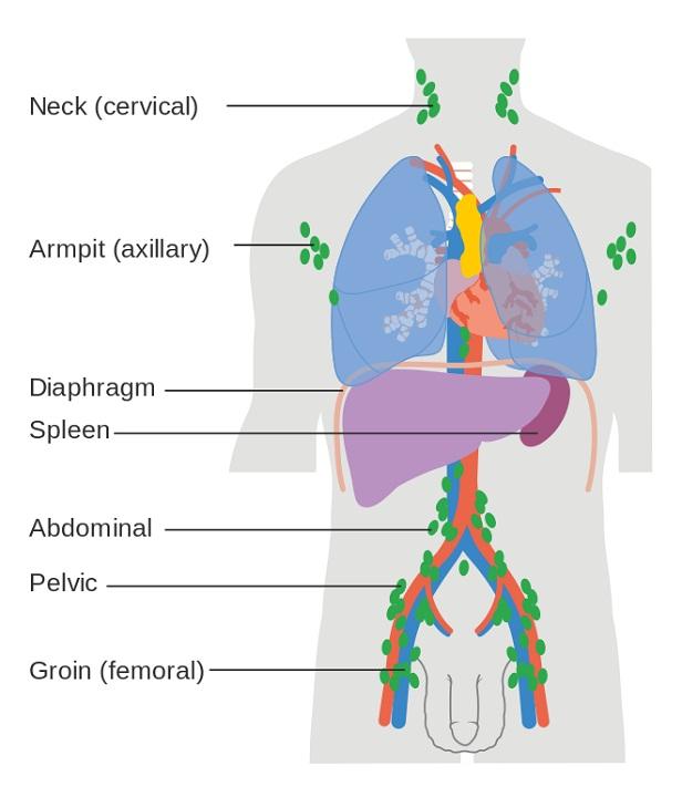 lymph node diagram locations