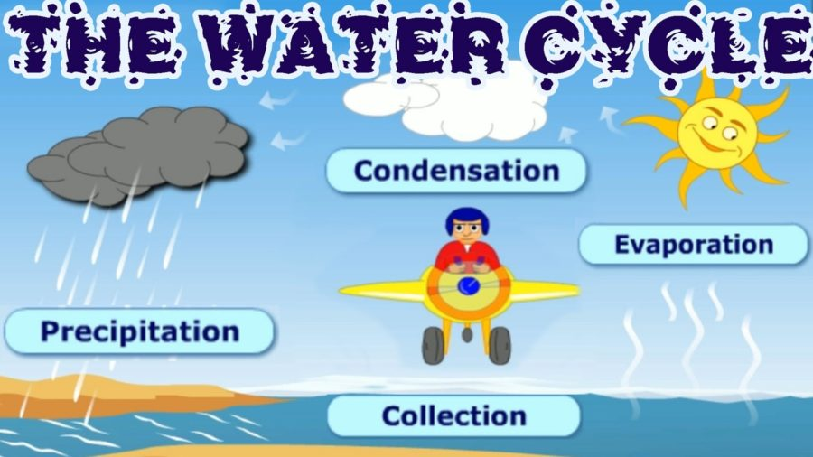 the water cycle diagram kids