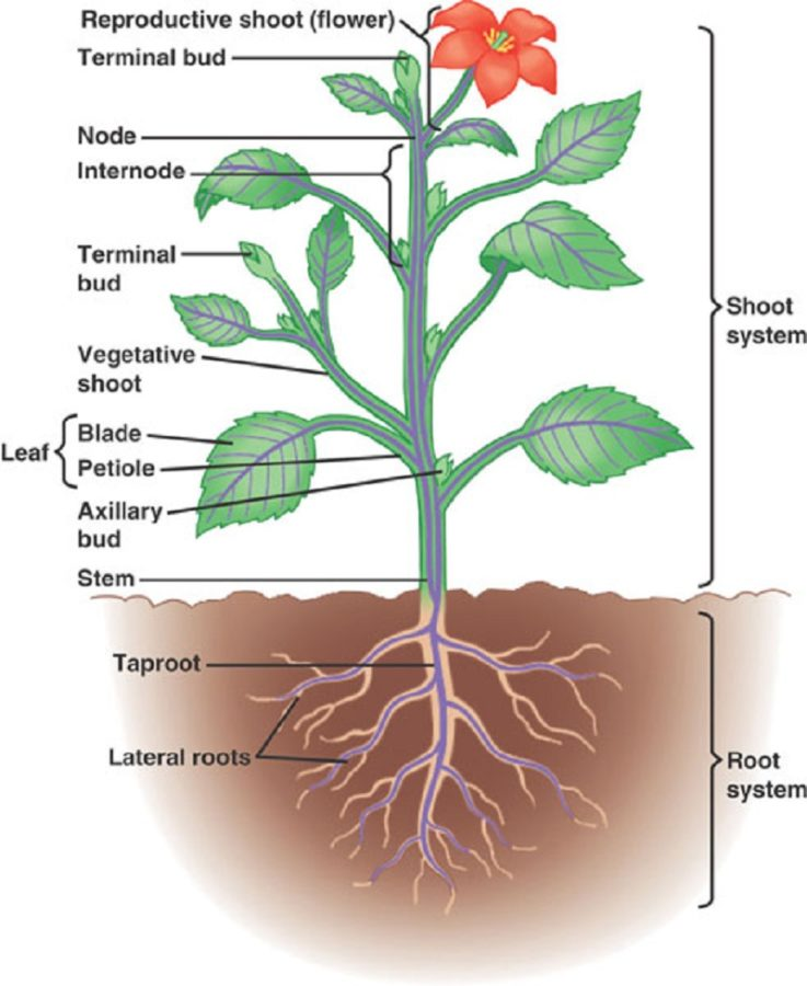 diagram of a plant biology