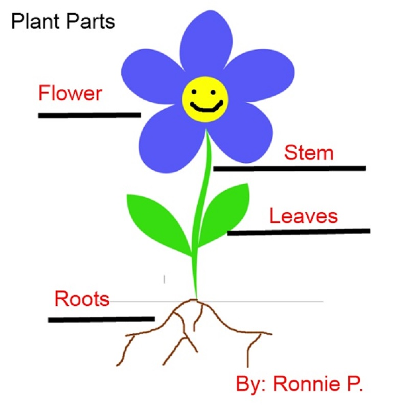 diagram of a plant for kids