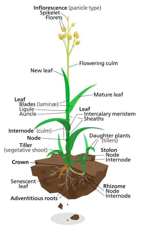 diagram of a plant labeled