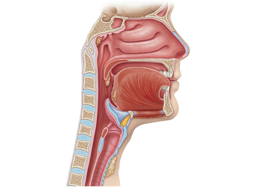 diagram of the throat blank