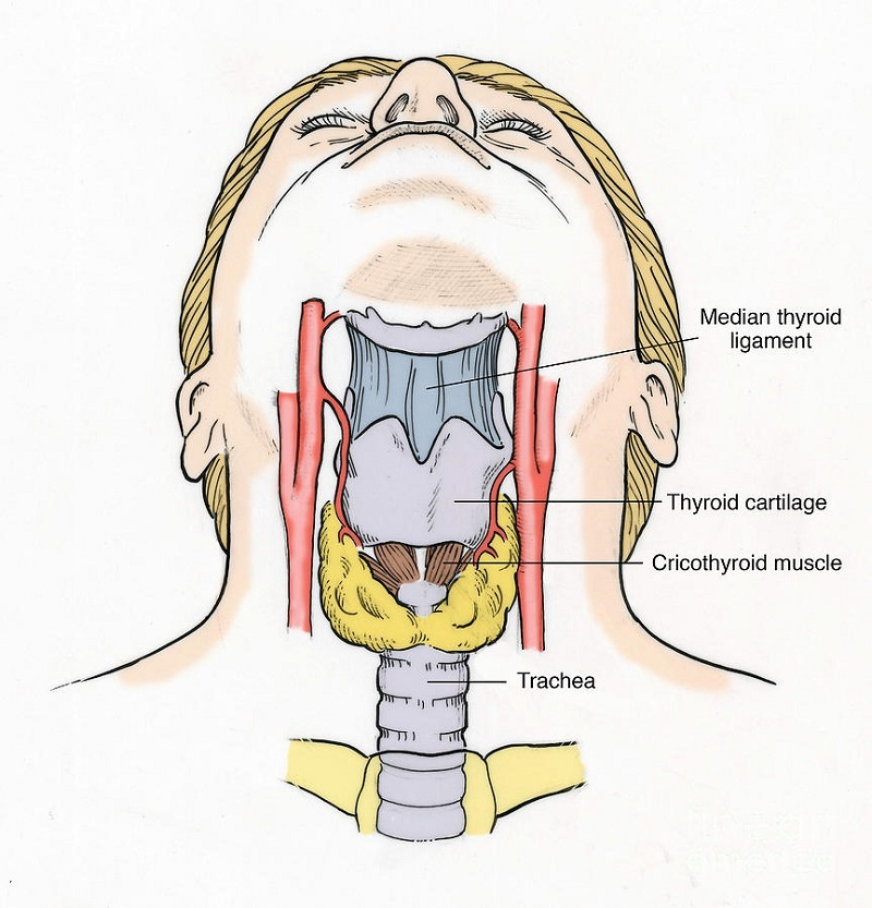 diagram of the throat image