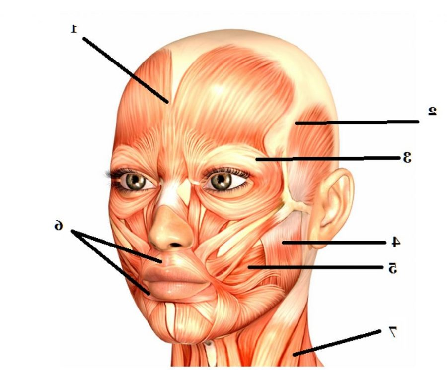 face diagram blank