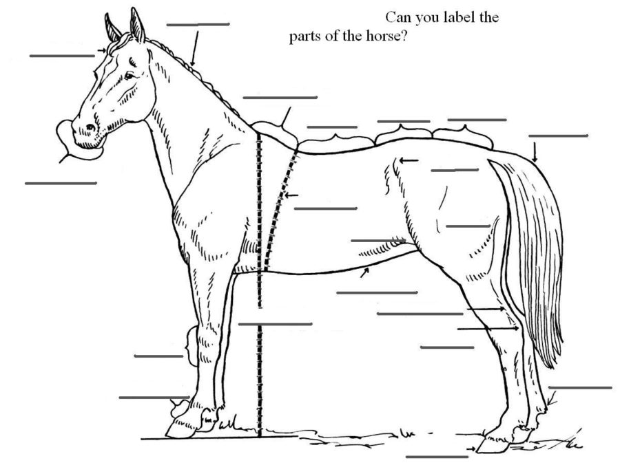 horse diagram worksheet