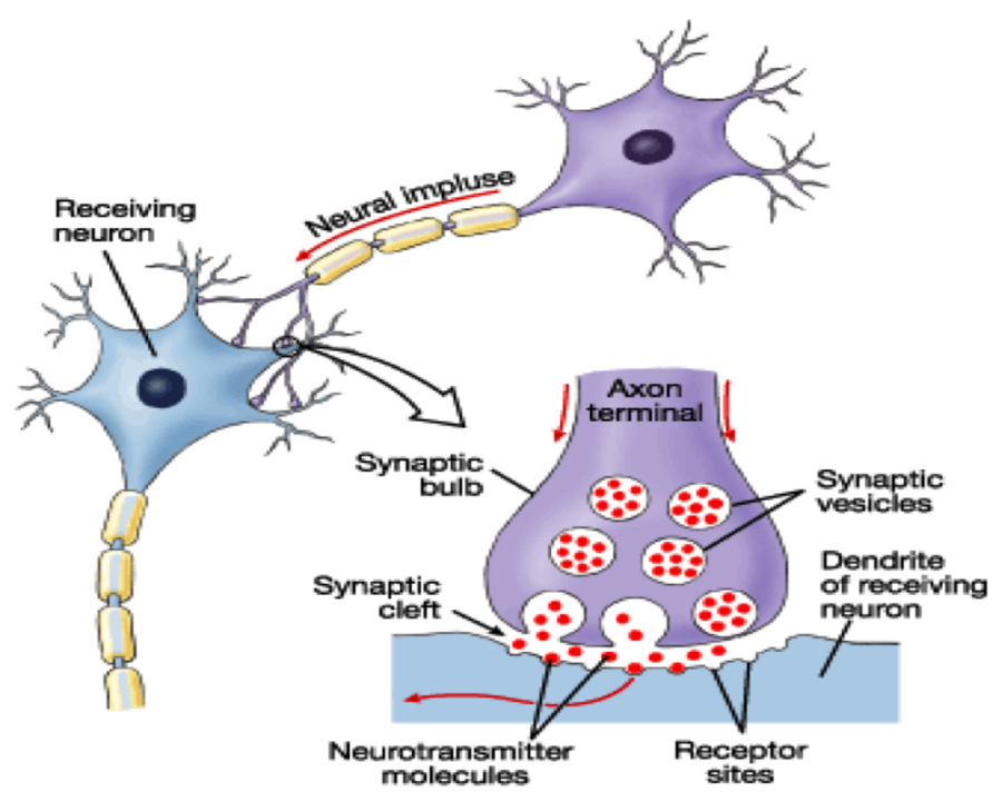 synapse diagram page