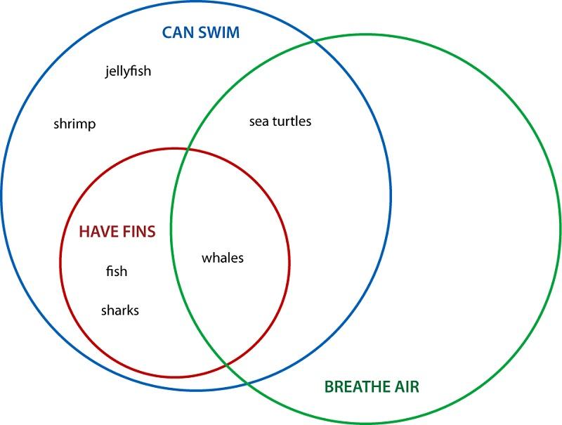 3 circle venn diagram worksheet
