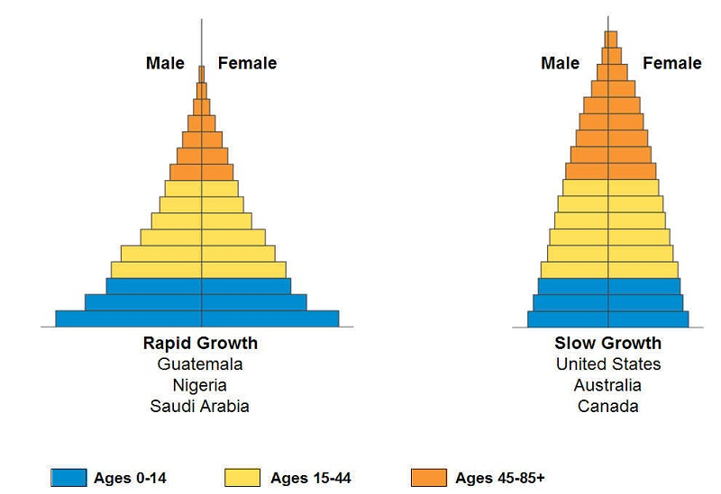 age structure diagram example
