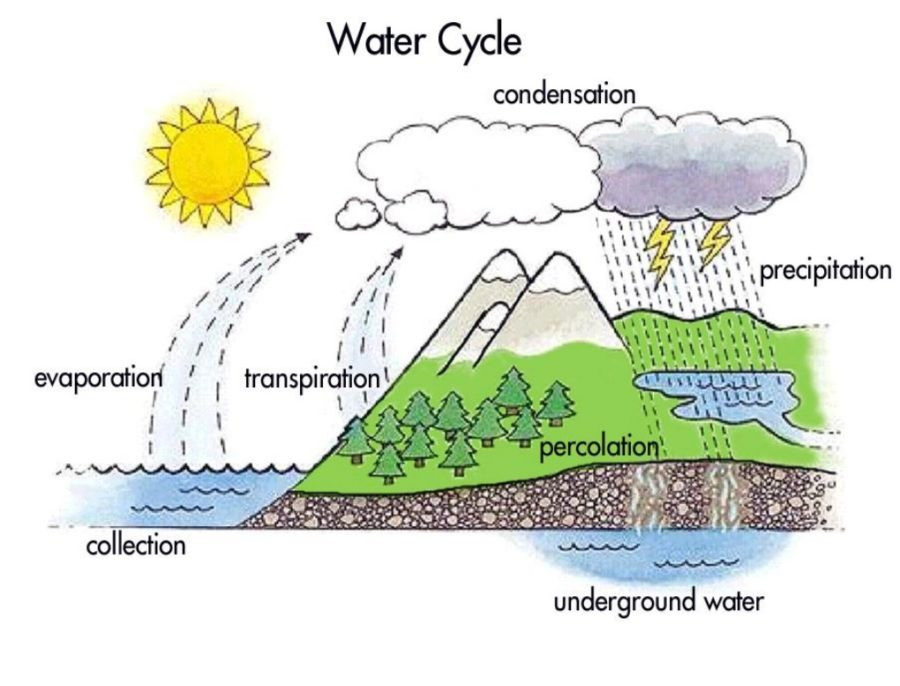 diagram of the water cycle printable