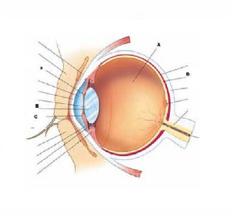 eye diagram quiz parts