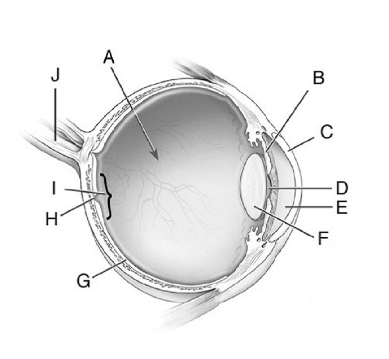 eye diagram quiz unlabeled