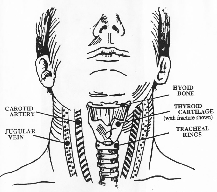 neck diagram human