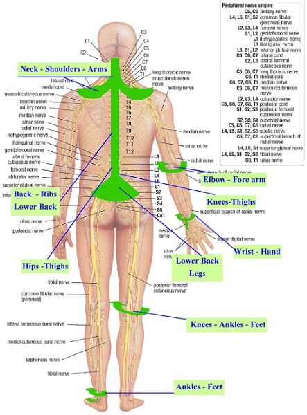 nerve diagram pain