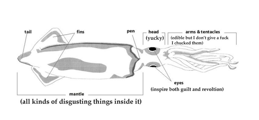 squid diagram internal