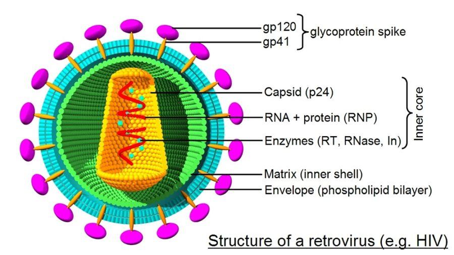 virus diagram detailed