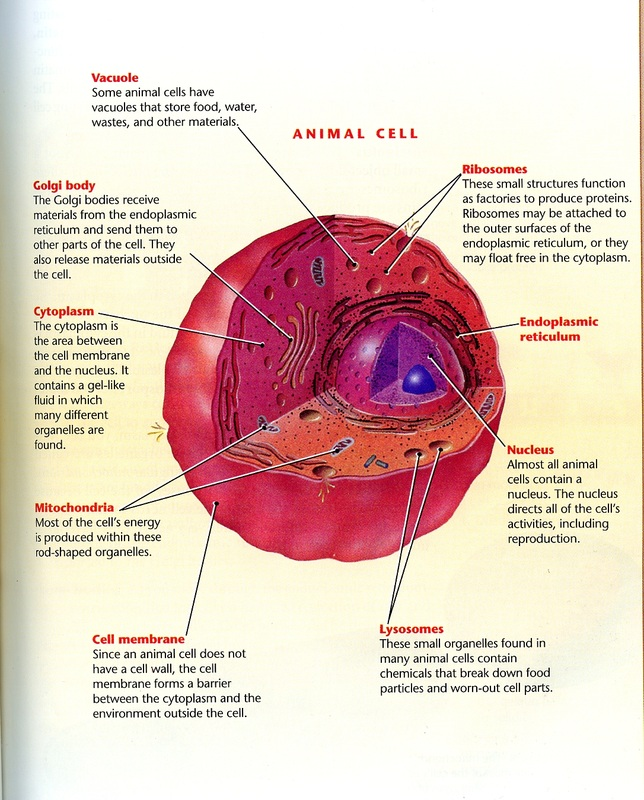 animal cell diagram labeled book