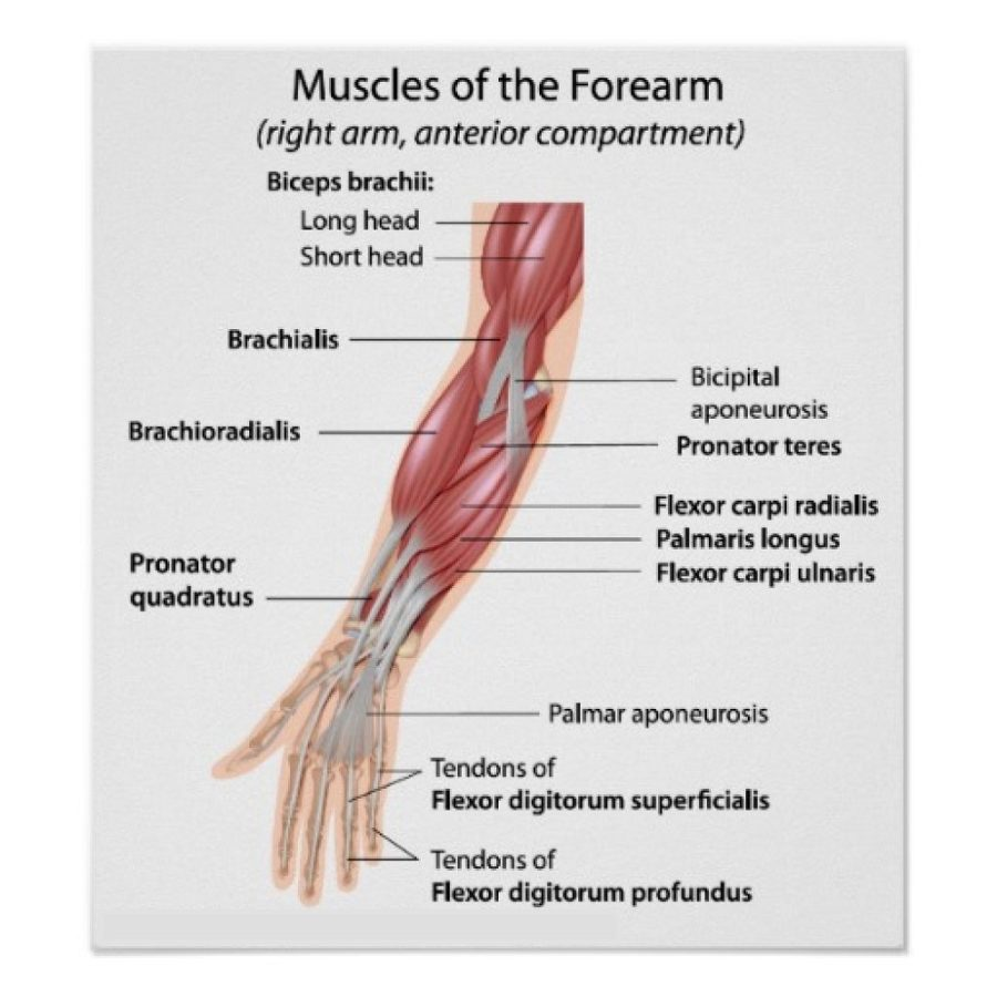 arm diagram detail