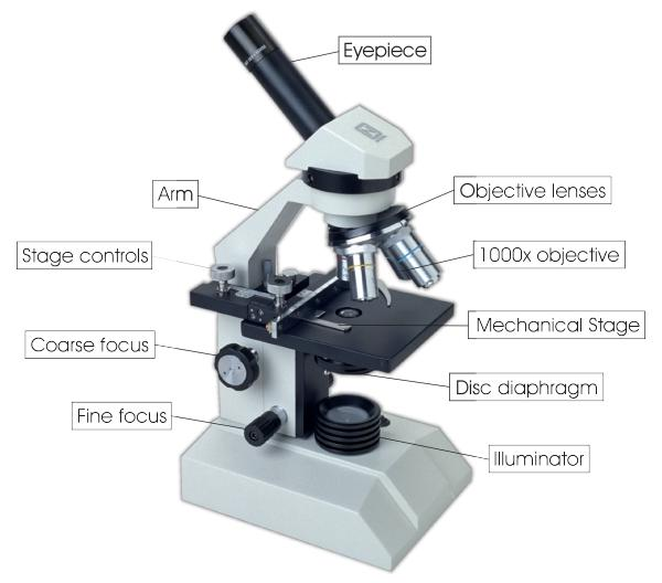 diagram of microscope labeled