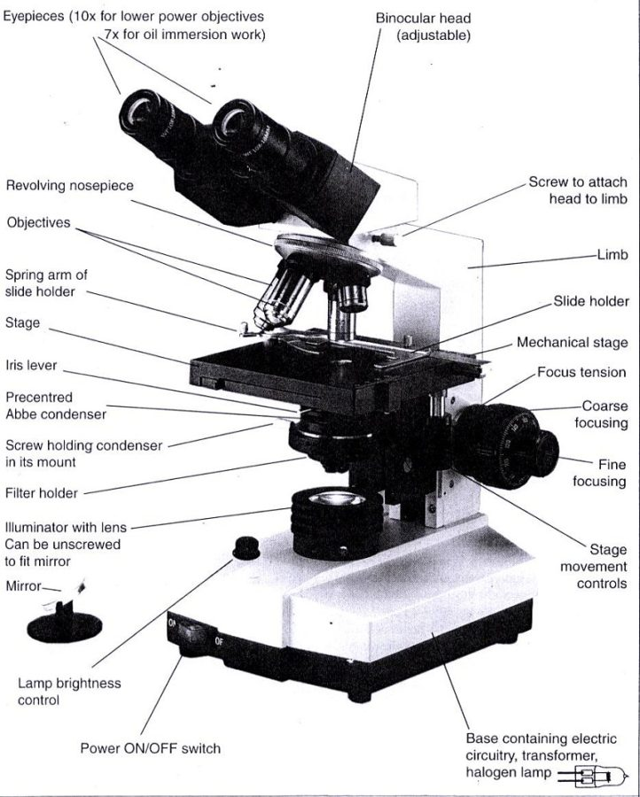 diagram of microscope optics