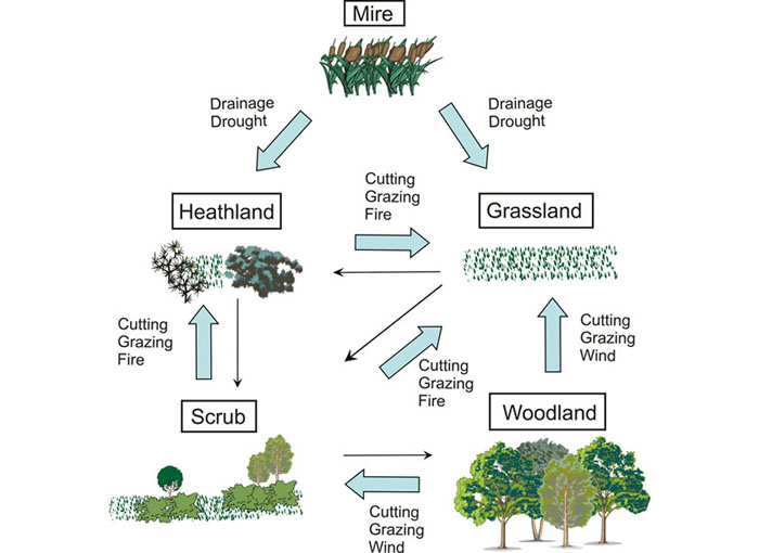 ecosystem diagram forest