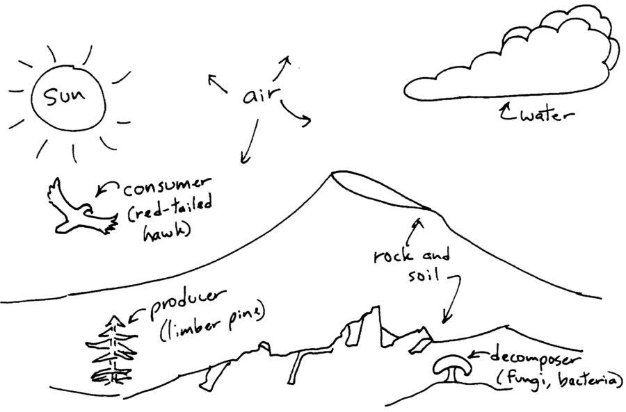 ecosystem diagram simple