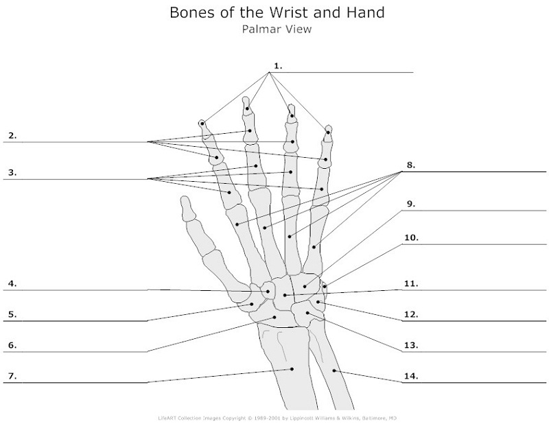hand diagram unlabeled